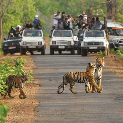 Kanha tour packages & Bandhavgarh tour packages
