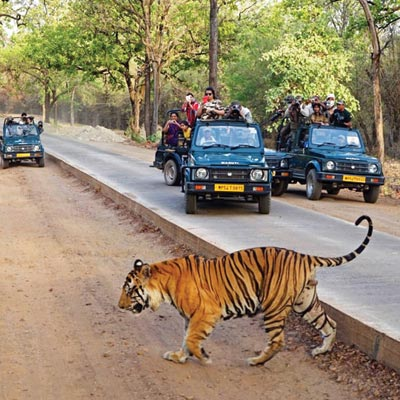pench tour package