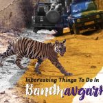 amazing bandhavgarh adventures