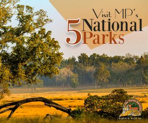 National Parks in Madhya Pradesh