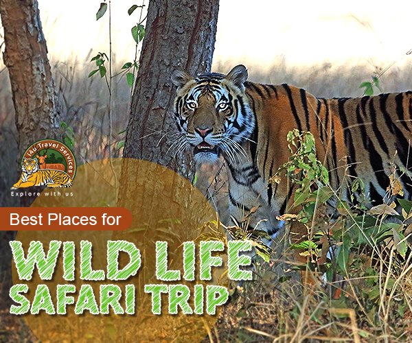 Wildlife safari trip