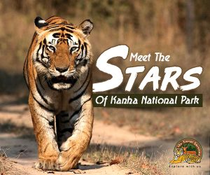 Meet The Stars Of Kanha National Park