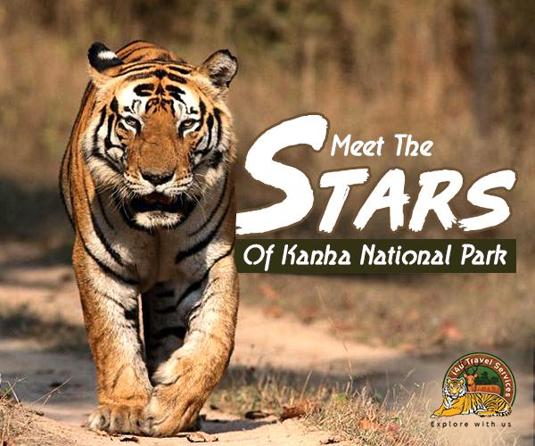 Meet The Stars Of Kanha National Park