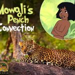Mowgli's Pench Connection