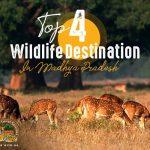 Wildlife destination in mp