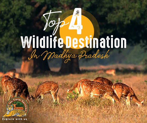 Wildlife destination in mp