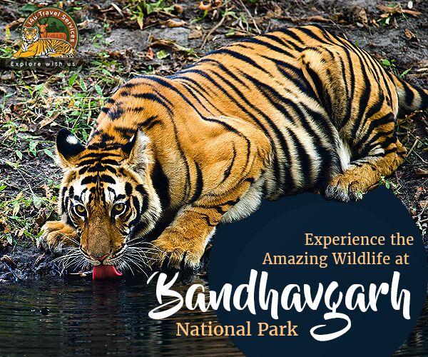 Kanha Bandhavgarh Khajuraho Orchha Tour Package From Jabalpur For 7n